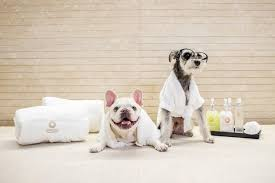 You can now book spa days with your DOG – and they'll even get a pet pedicure
